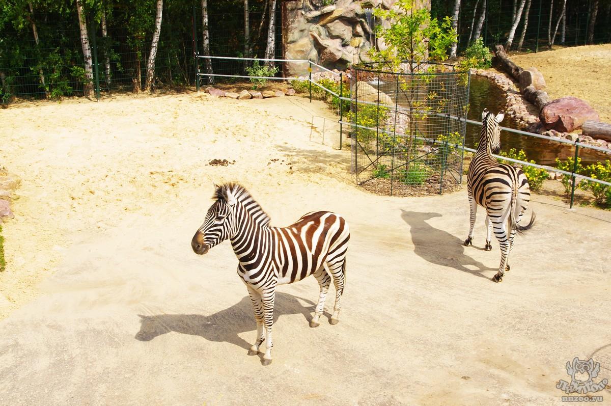 схема проезда в зоопарк в нижнем новгороде